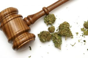 RX Green Countersues Over False Claims