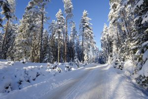 Homeowner Wins Easement Access Rights Across National Forest Land